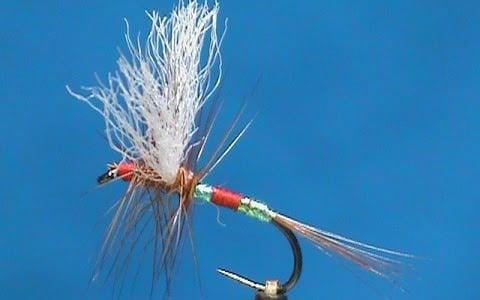 Jim Misiura's Patriot Fly