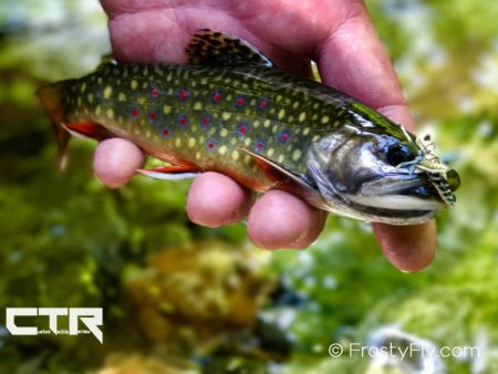 Brook trout caught on a realistic hopper