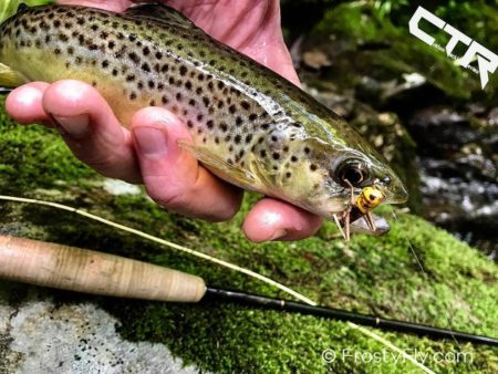 Brown trout loving the hopper
