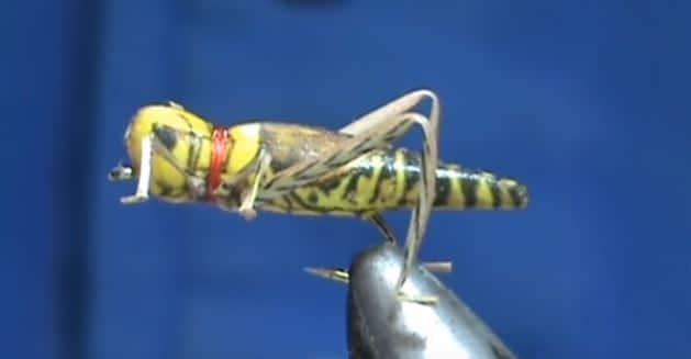 No-Tie Realistic Grasshopper