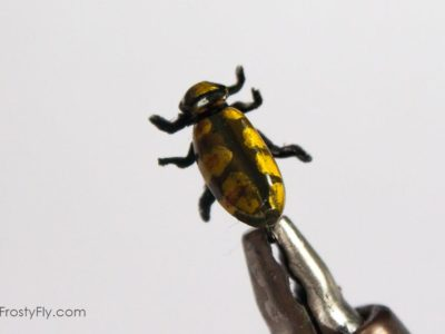 Realistic Gold Beetle Fly