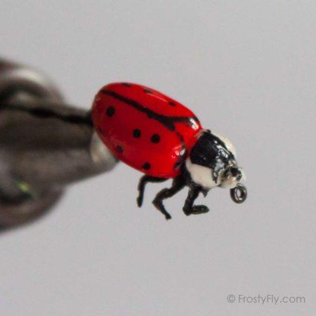 Realistic Red Ladybug Fly