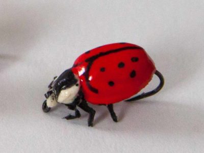 Realistic Red Ladybug Fly