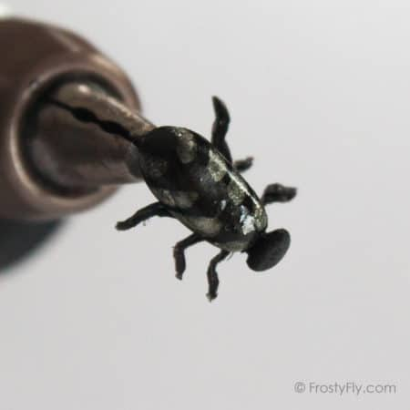Realistic Silver Beetle Fly