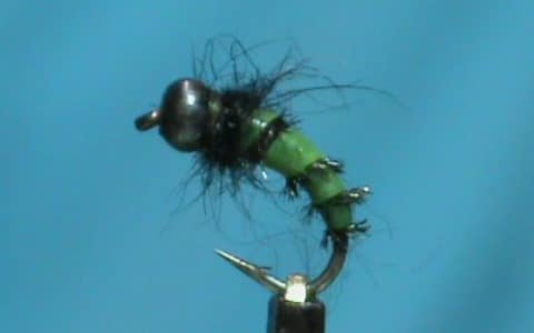 Jim Misiura's Ribbed Caddis Larva