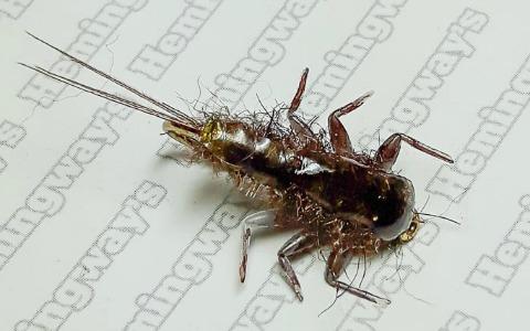 Mayfly Clinger Nymph