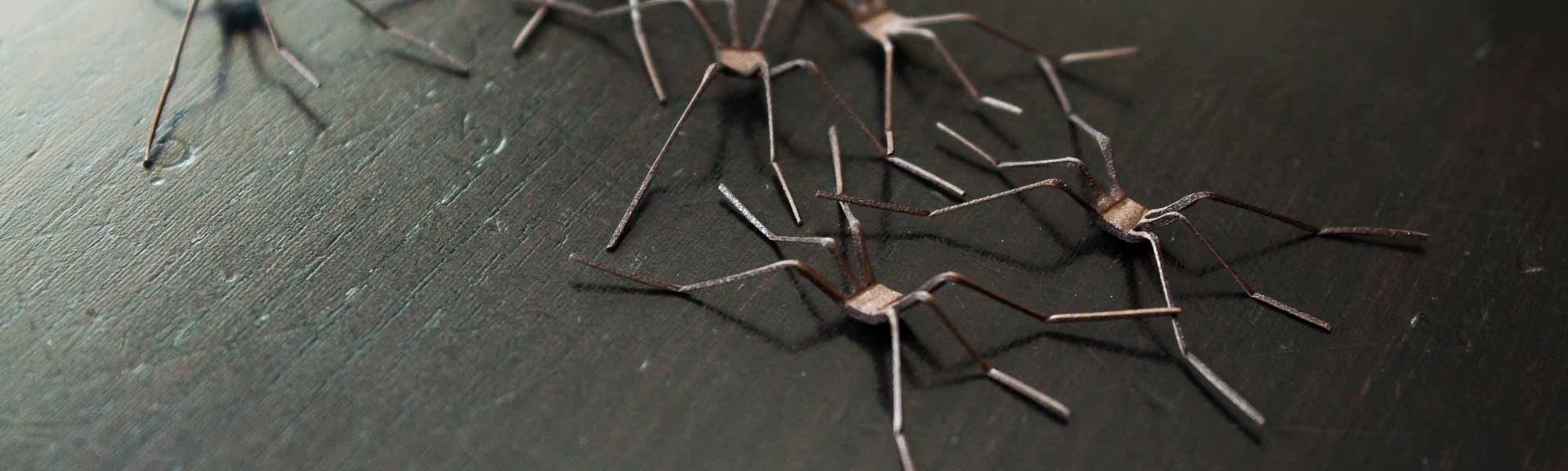 Realistic Crane Fly Legs 3D