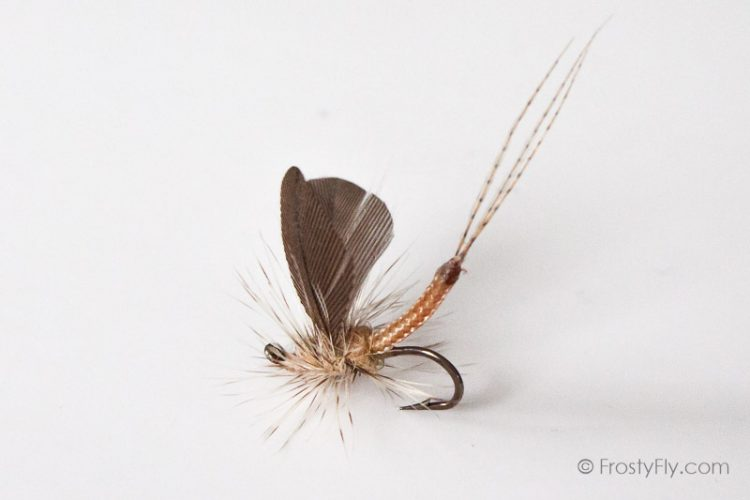Realistic Mayfly Tied by Dimitri Ristic