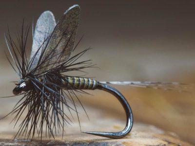 Quill Body Mayfly by Fly Fiend