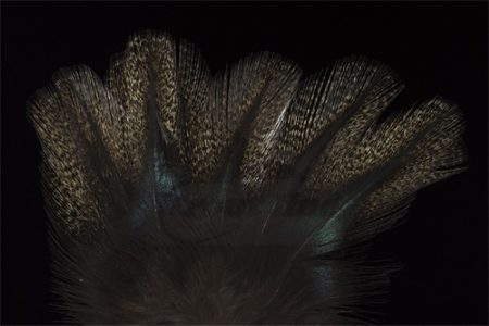 Coq de Leon Colgaderas Feathers - Pardo Corzuno Oscuro