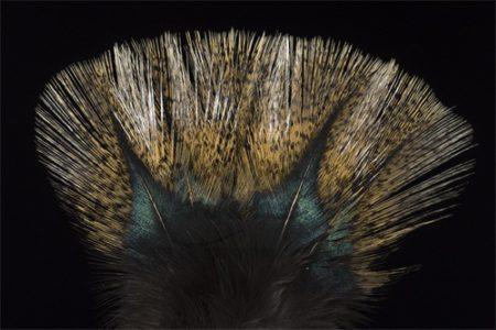 Coq de Leon Colgaderas Feathers - Pardo Flor de Escoba
