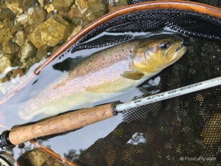 Sinapsi Black Sheep by Marco Guidici is a great Euro Nymphing rod. It is also great for dry flies and mini streamers.