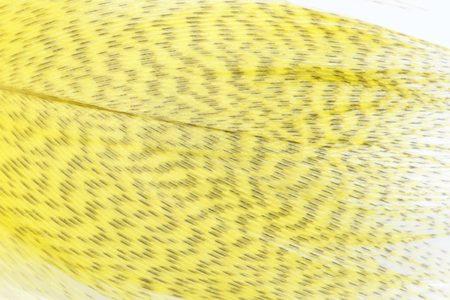 Mallard Barred Feathers - Yellow