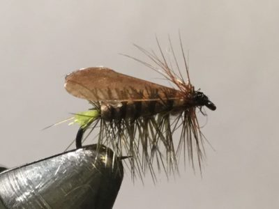 Egg-Laying Caddis Dry Fly