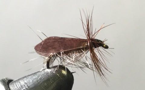 Hemingway's Caddis Dry Fly