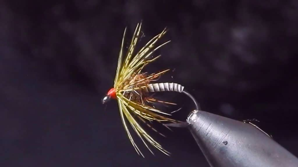 Fly Tying with Corey: Soft Hackle
