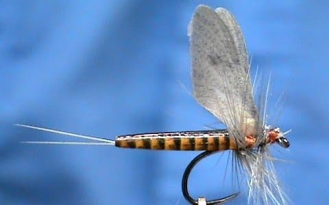 Realistic Red Quill Mayfly Dry Pattern by Jim Misiura