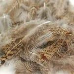 Soldarini Selected Partridge Feathers - Natural Brown