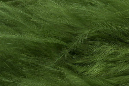 Marabou Feathers - Hand-Selected - Green Olive