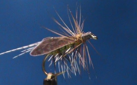 Caddis Special by Jim Misiura