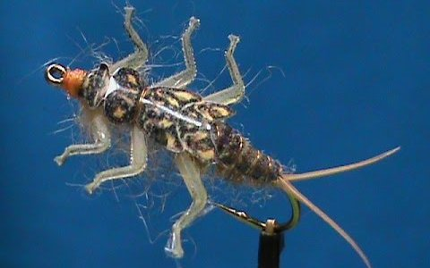 Golden Stonefly Nymph by Jim Misiura
