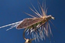 Caddis Special Fly Tying Video by Jim Misiura