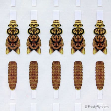 Realistic Stonefly Nymph Wing Buds & Back - Gold - Medium