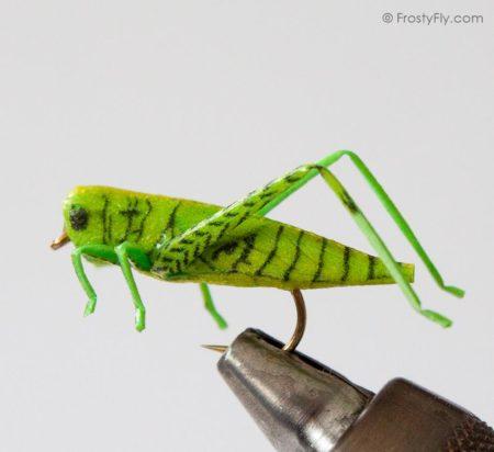 Realistic Hopper - Grasshopper - Green