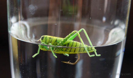 Realistic Grasshopper - floating in the water