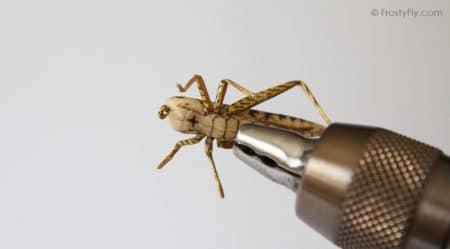 Realistic Tan Grasshopper