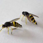 Realistic Wasp Flies