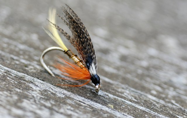 Streamer Flies and Why Fish Strike at Them