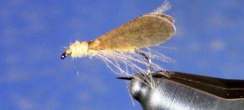 Tan Caddis by Tim Cammisa